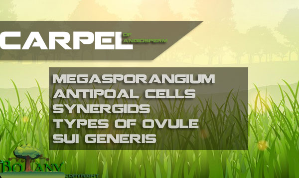 Megasporophyll And Types of Ovule In Angiosperms