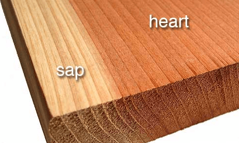 Heartwood and sapwood