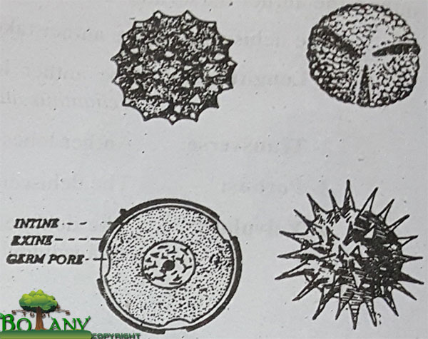 Types of Microspore