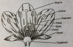Morphology Of The Flower