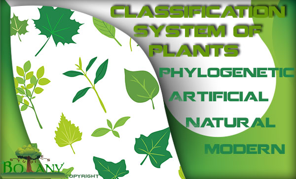 Plant Classification System Types