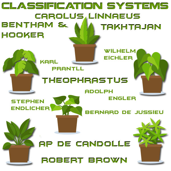 Plant Classification System