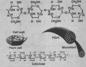 Chemical composition of cell wall