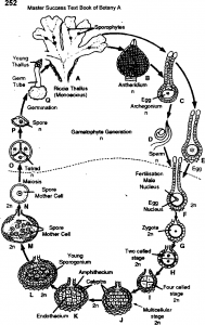 Life cycle of Riccia