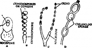 types of spores