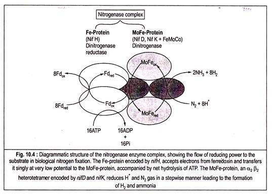 Biochemistry of Biological Nitrogen Fixation