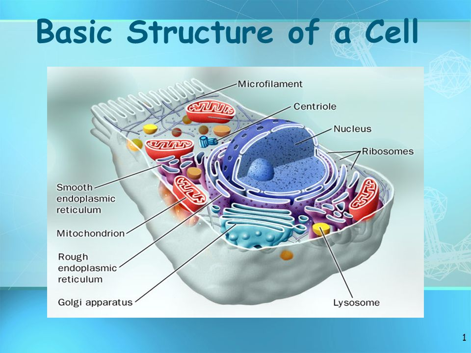BIOLOGICAL CELL INTRODUCTION