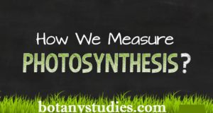 How to measure photosynthesis