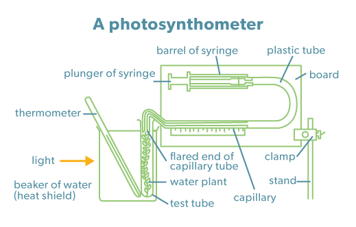 Photosynthometer