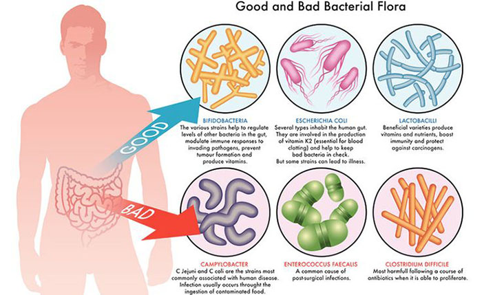 General Economic Importance Of Bacteria