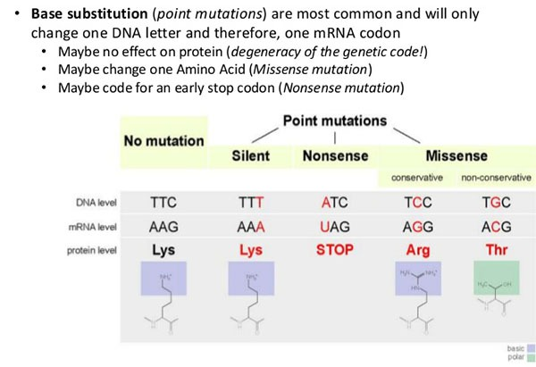 Point Mutation and its Types