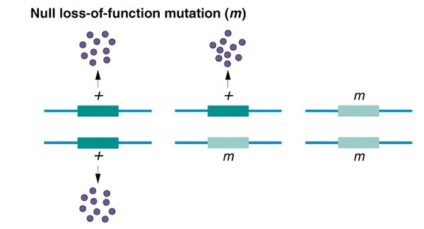 Amormphic Mutations