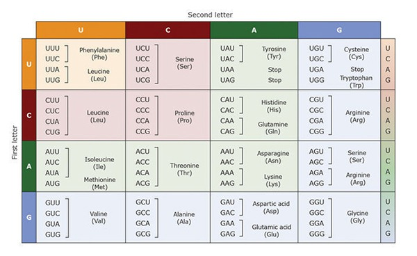Table For Genetic Codes