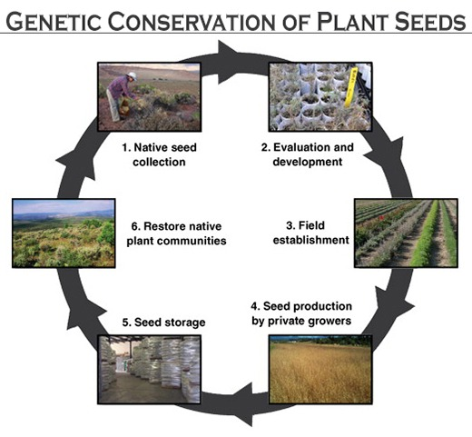 Plant Seeds Genetically Conserved