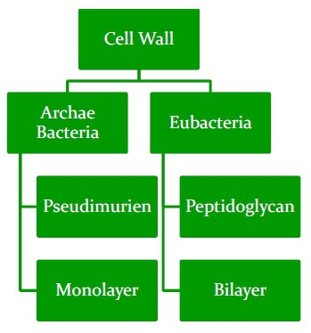 Cell Wall Composition in Prokaryotes and Eukaryotes