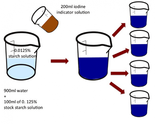Effects of Amylase on the Breakdown of the Starch