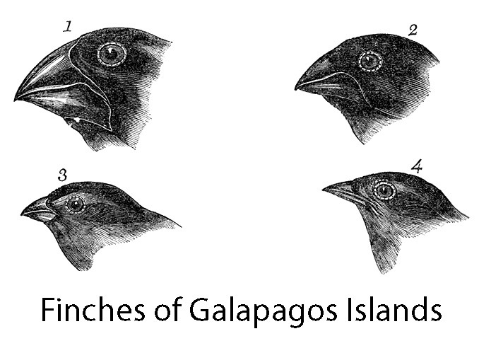 Galapagos Islands Finches