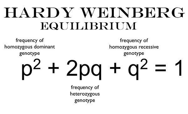 Hardy Weinberg Equilibrium Equation
