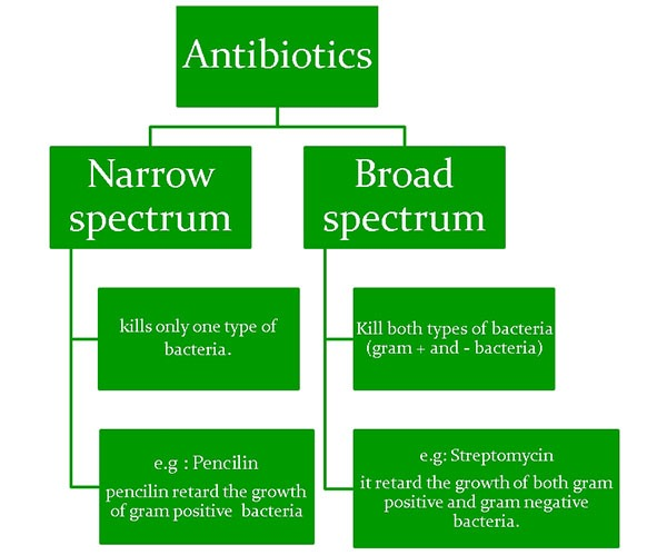 Types of Antibiotics