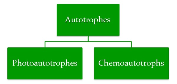 Nutritional Division of Autotrophes