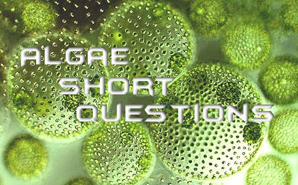 Algae Short Questions