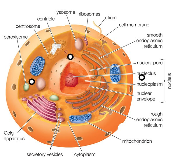 Cytoplasm Question Answers