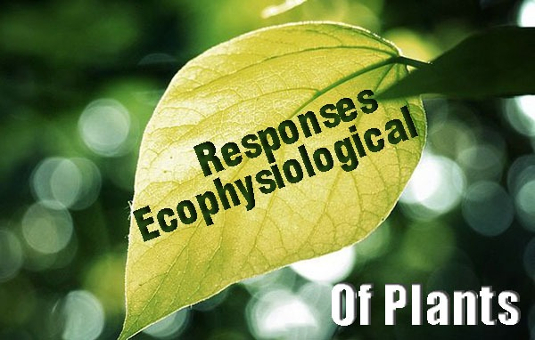 Ecophysiological Responses of Plants to Light