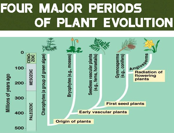 Four Major Periods of Plant Evolution