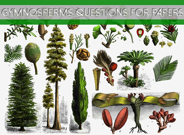 Gymnosperms Questions for Papers