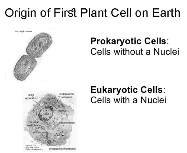 Origin of First Plant Cell on Earth