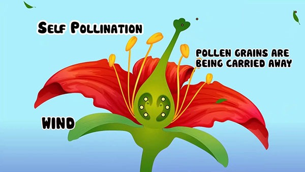 Self Pollination - How Does Self Pollination Occur