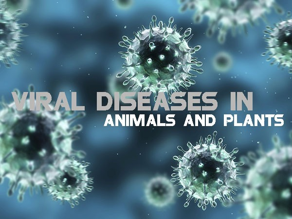 Viral Diseases in Animals and Plants