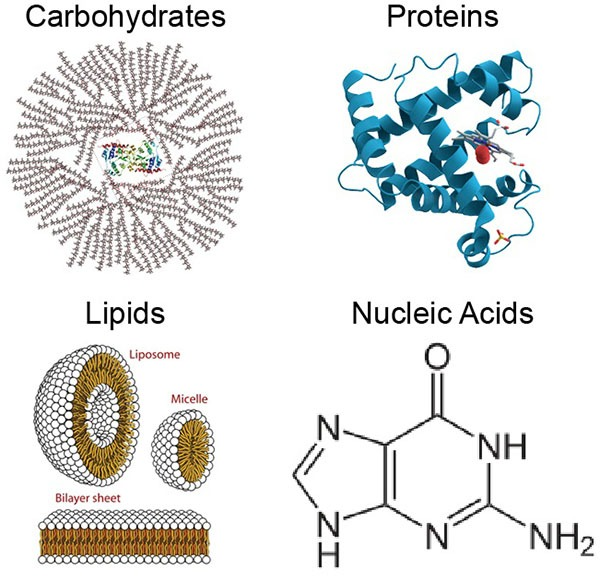 biomolecules important questions