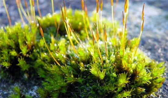 Bryophytes Test Questions for Exams