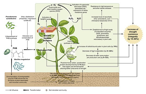 Drought Resistance Mechanism in Plants