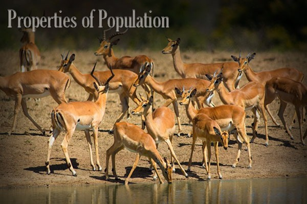 Properties of Population Ecology