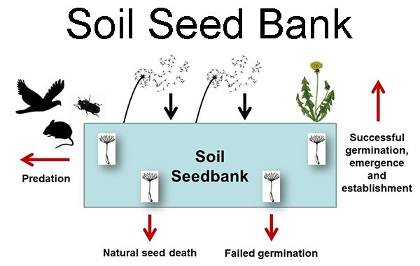 What is a Seed Bank and Why is it Important