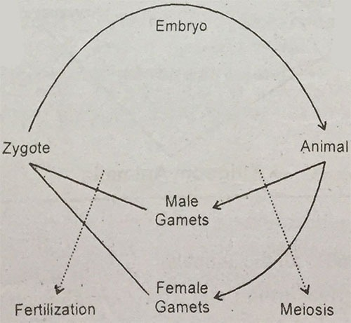 Biology Chapter 10 Kingdom Animalia MCQs