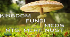 Chapter 8 Kingdom Fungi MCQs