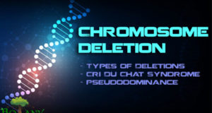 chromosome deletion