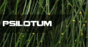 Detailed Study Of Psilotum Nudum