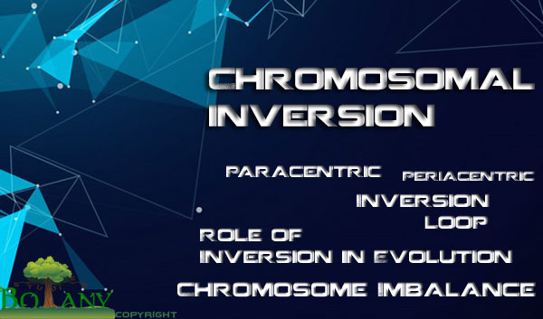Chromosomal Inversion