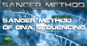 Sanger Sequencing - Sanger Method of DNA Sequencing