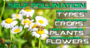 Self Pollination - Types of Self Pollination