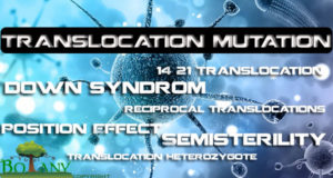 Translocation Mutation